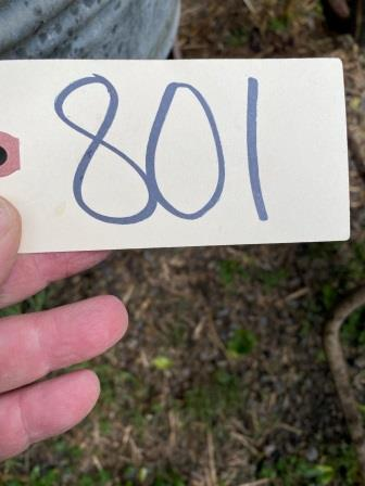 801 (1)